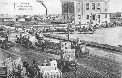 Cotton going to be weighed - Ca 1900